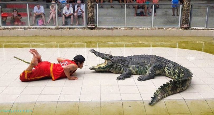 Show with crocodiles in Thailand