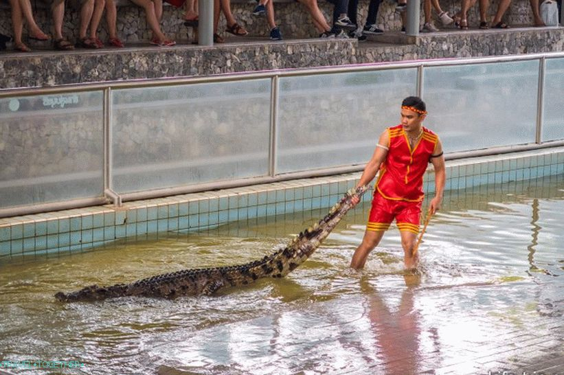 Show with crocodiles
